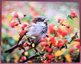 Bird 100 pieces