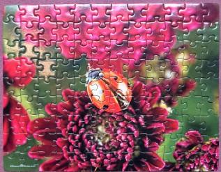 Ladybug - 100 pieces