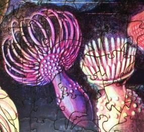 Sea Anemones 2