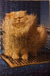 Air Vent Kitty