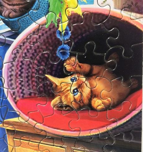 Kitten Play 7