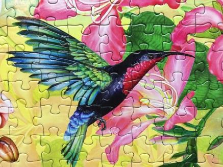 Hummingbird Garden 1