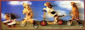 Rufff Riders